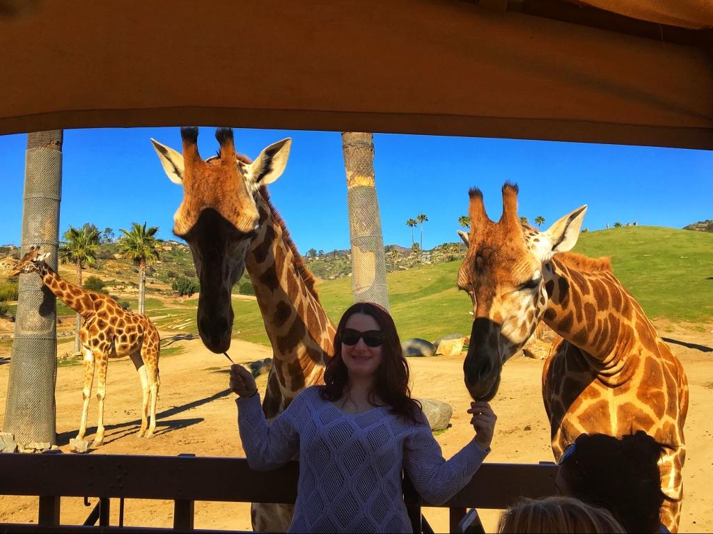 Photo of Cher feeding 2 Giraffes in San Diego California